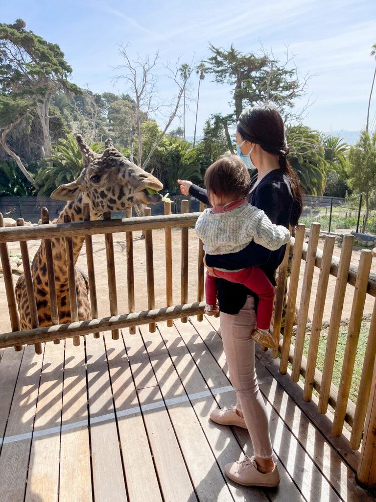 Santa Barbara Zoo giraffe experience