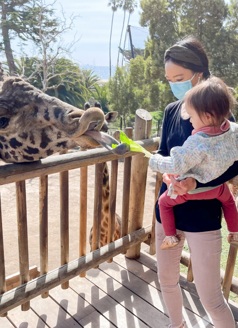 Tips to Help Plan Your Trip to the Santa Barbara Zoo